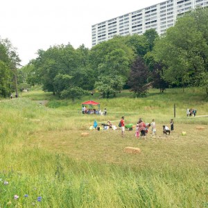 """A key public space of the major urban plan for La Duchère, this park revitalises a geography that has been mistreated by history while developing """"urban nature"""" that links and bonds the area together. Used as a spoils storage site during the creation of the """"Grand Ensemble"""" major housing complex, this small valley was mistreated over time by water engineering works (pipes) that are purely functional."""